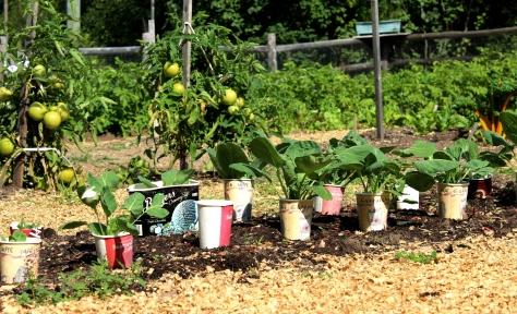 The Table's community garden
